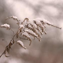 Privatfotografie-Kurs im Winter. Fühlen Sie sich einfach glücklich und vergessen Sie alles um sich herum.