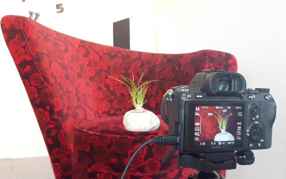 Fototipp für Zuhause, nutze einen schönen Sessel als Hintergrund für dein Foto.